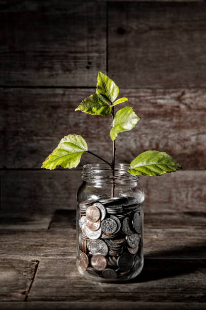 Young plant growing from coin jar stock photo stock photo