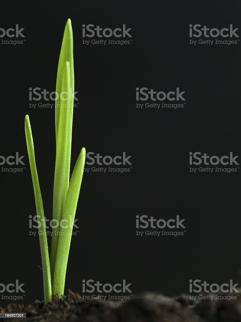 young plant growing from fertile soil royalty-free stock photo