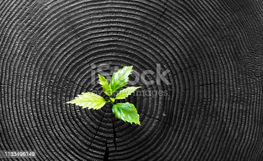 istock Young plant growing from old stump 1133496149