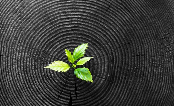 jonge plant groeit van oude stomp - herbebossing stockfoto's en -beelden