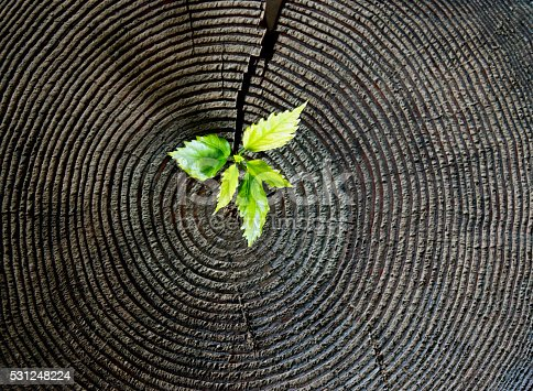 istock Young plant growing from old stump 531248224