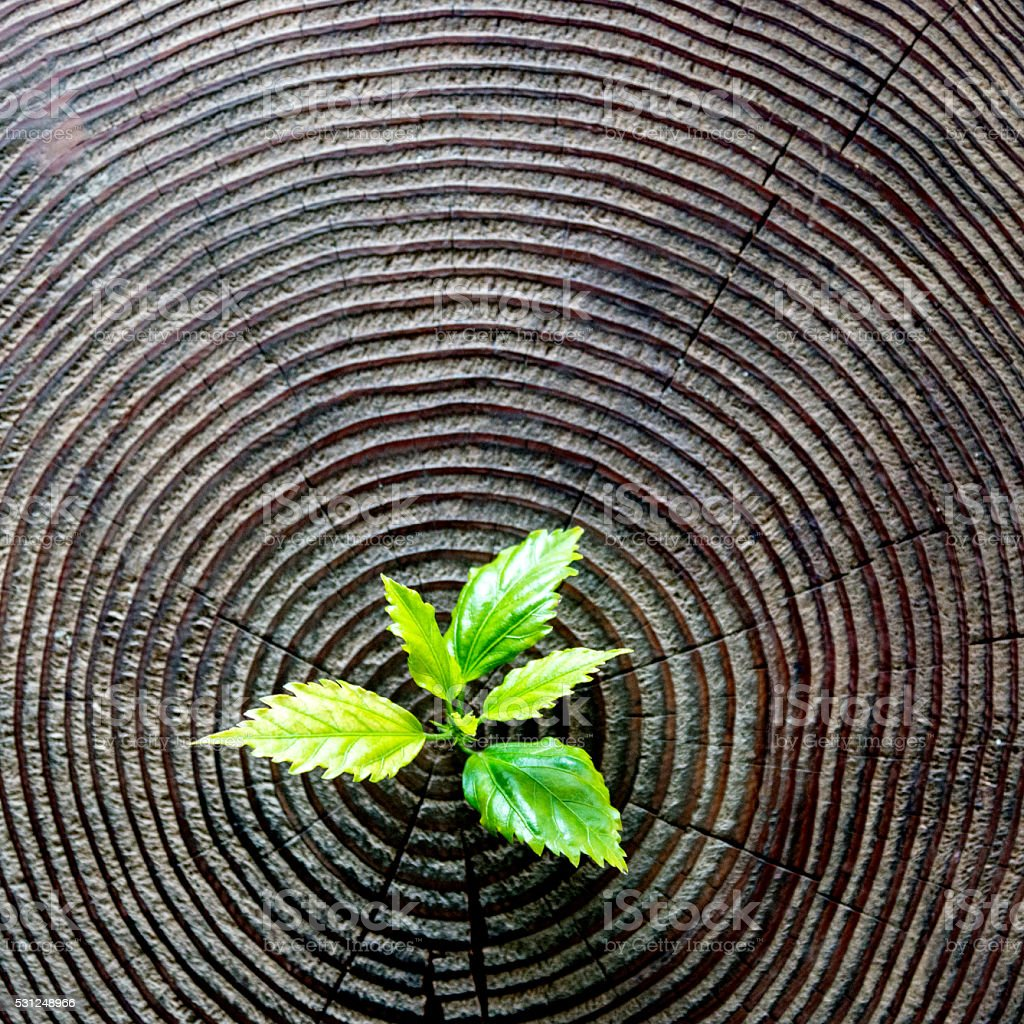 Young plant growing from old stump stok fotoğrafı