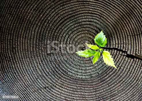 istock Young plant growing from old stump 625976904