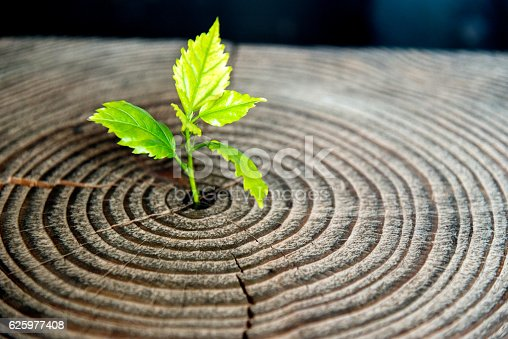 istock Young plant growing from old stump 625977408