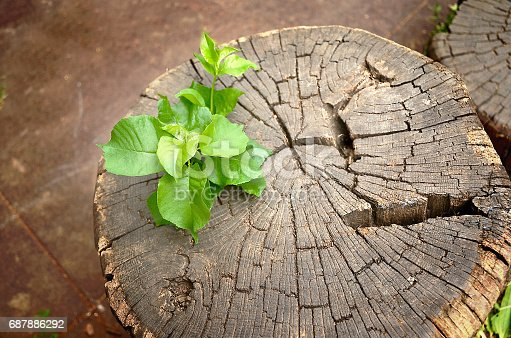 istock Young plant growing from old stump 687886292