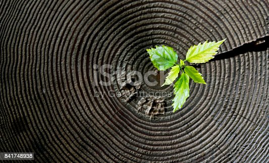 istock Young plant growing from old stump 841748938