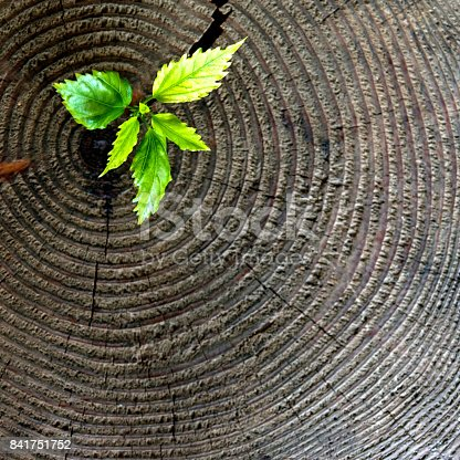 istock Young plant growing from old stump 841751752