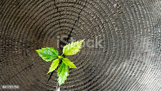 istock Young plant growing from old stump 841751754