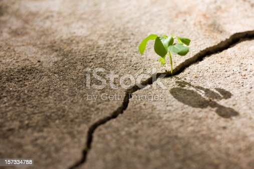 A tiny delicate shoot of a plant grows out from an inhospitable crack on a concrete path, struggling to survive and grow in the harsh conditions that it has taken root. Great survival, hope and and adversity concept. Good useable copy space also with shallow focus on the seedling.