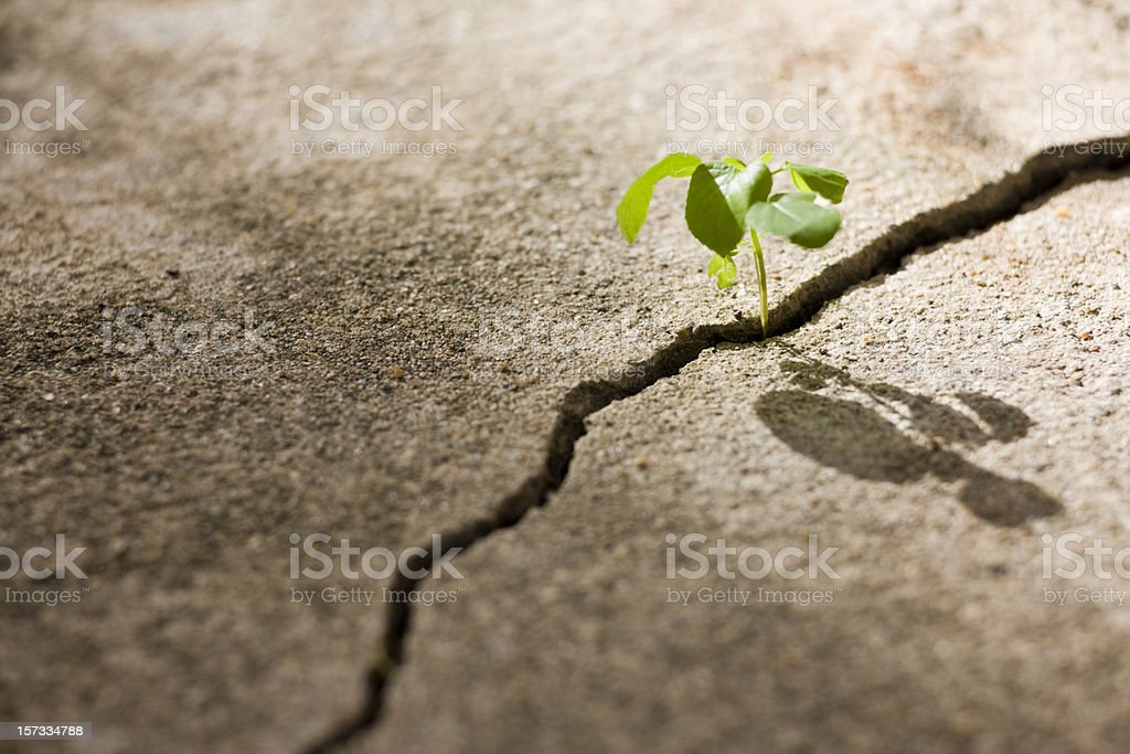 Young plant growing in a crack on a concrete footpath. stock photo