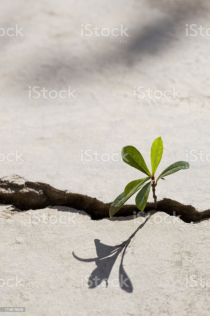 Young plant growing in a crack on a concrete footpath. royalty-free stock photo