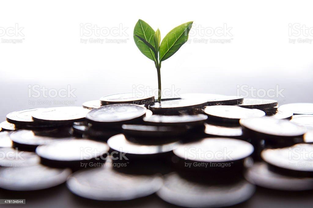 Junge Pflanze wächst auf Münzen – Foto