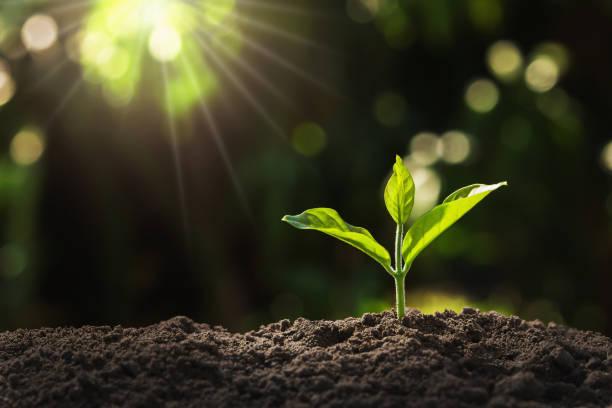 junge Pflanze wächst im Garten mit Sonnenlicht – Foto