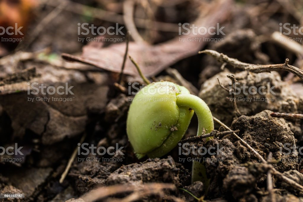Young plant growing in soil , Agriculture concept . stock photo