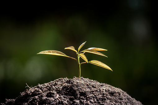 486530452 istock photo Young plant growing in soil on green background 488109048