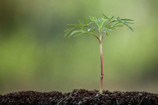 486530452 istock photo Young plant growing in soil on green background 641258000