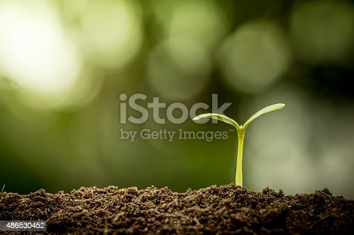 istock Young plant growing in soil on green bokeh background 486530452