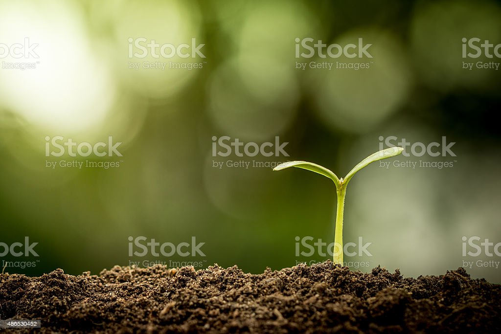 Young plant growing in soil on green bokeh background stock photo