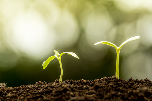 486530452 istock photo Young plant growing in soil on green bokeh background 486531546