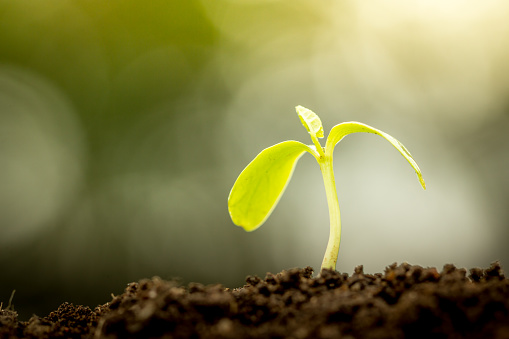 486530452 istock photo Young plant growing in soil on green bokeh background 486533050
