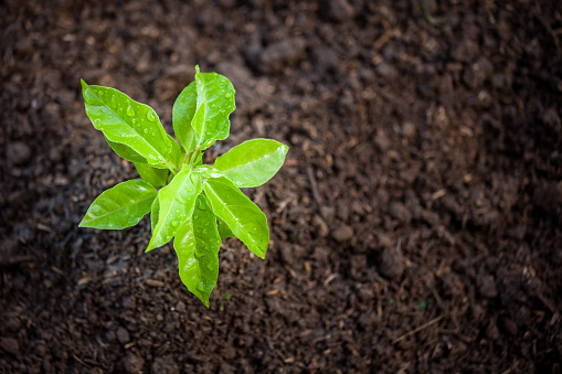 486530452 istock photo Young plant growing in soil 690415980
