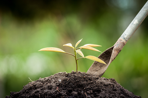 486530452 istock photo Young plant growing in soil with shovel on green background 488109236