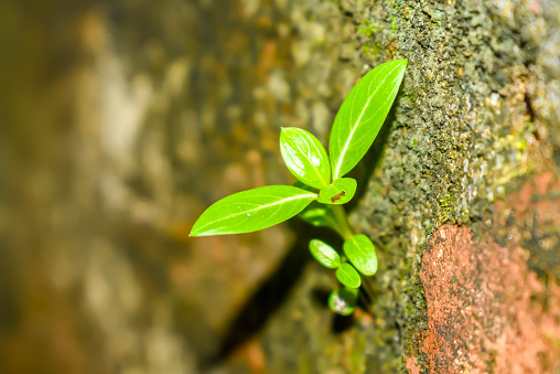 1139475964 istock photo Young Plant Growing In Sunlight. Lawn grass sprouting. Young sprout in springtime,Closeup.Plant trees to reduce global warming. Small plant - Grow concept 1016111402