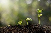 若い植物の成長朝の