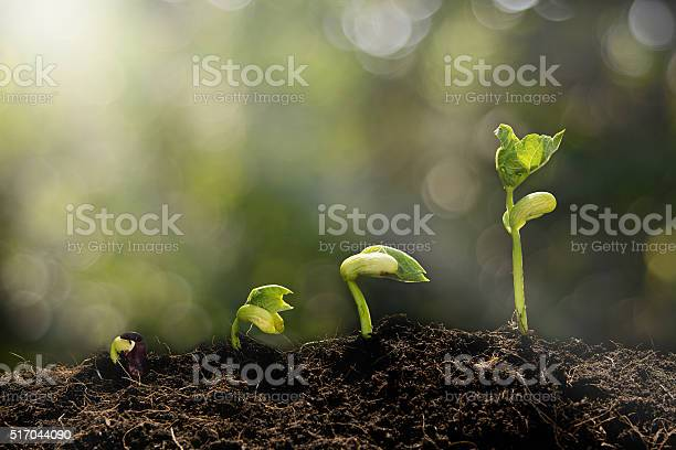Junge Pflanze Wächst Am Morgen Stockfoto und mehr Bilder von Anfang