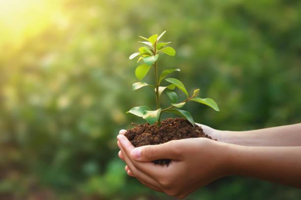 Junge Pflanze wächst auf Hand mit grünem Natur-Hintergrund. Öko-Konzept Erdtag – Foto