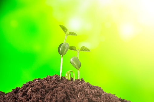 1094263056 istock photo Young plant growing on nature background 1067779892