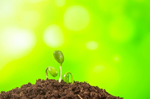 1094263056 istock photo Young plant growing on nature background 1067779934