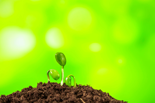 1094263056 istock photo Young plant growing on nature background 1067779946
