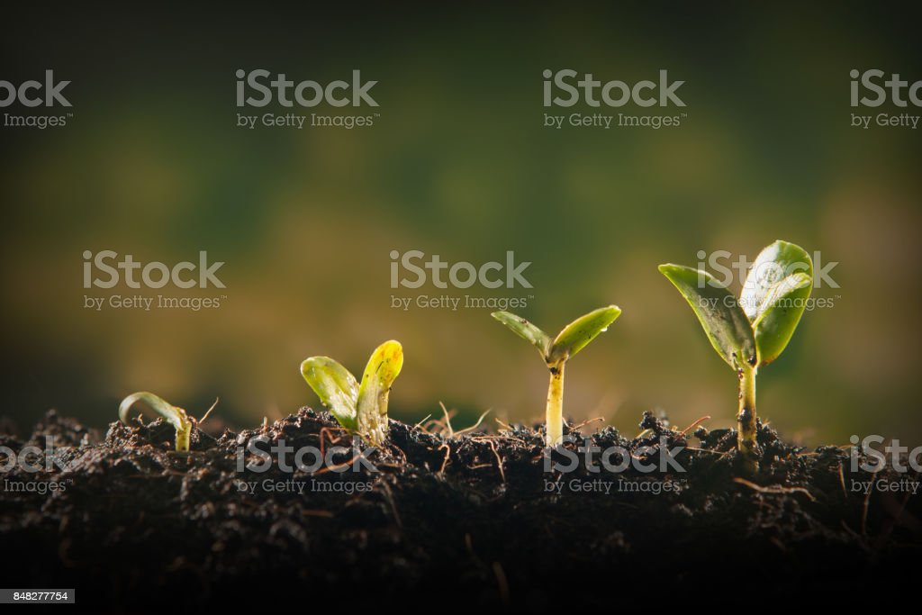 Young plant growing stock photo