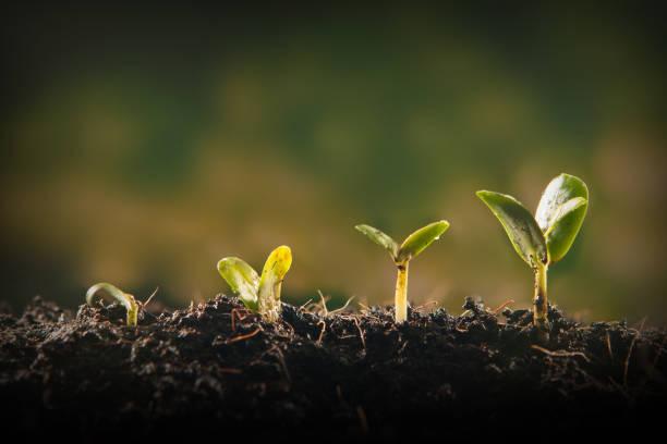 若い植物の成長 ストックフォト