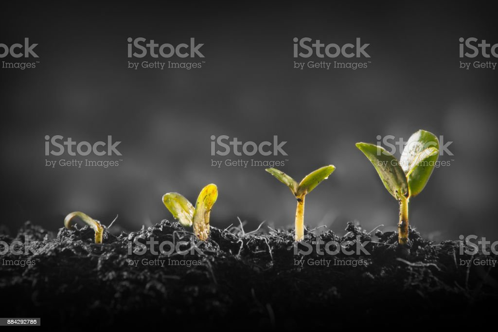 Young plant growing - foto stock