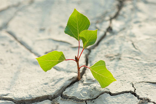young plant growing through the ground stock photo