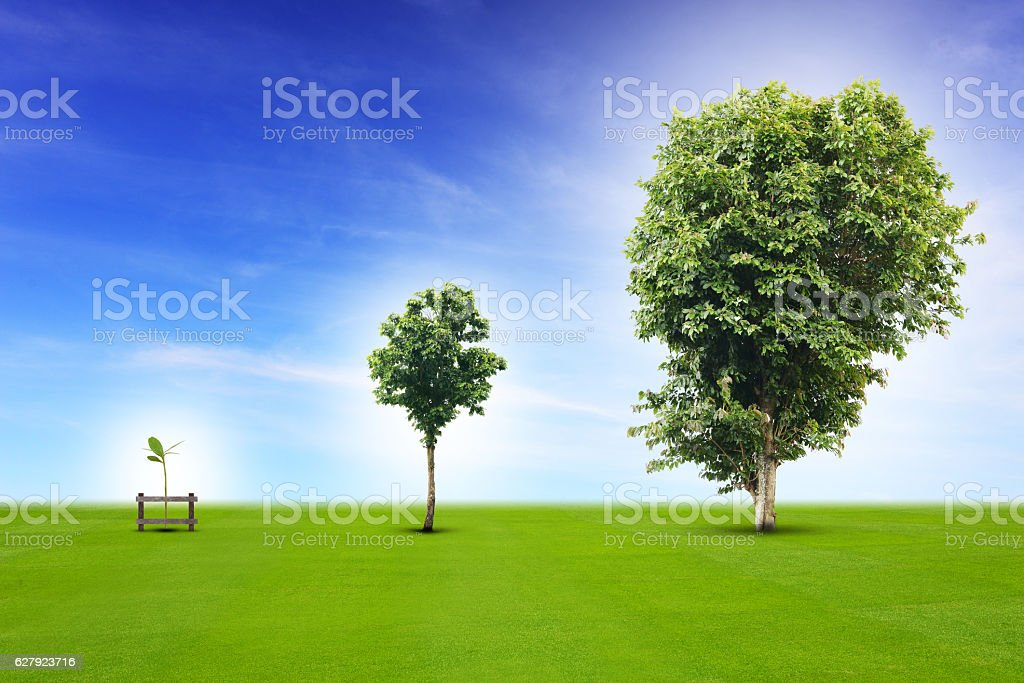 Young plant growing up process royalty-free stock photo