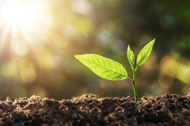 young plant growing with sun light. concept ecology stock photo