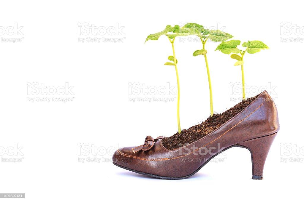 Young plant growth in lady shoe, recycle concept royalty-free stock photo