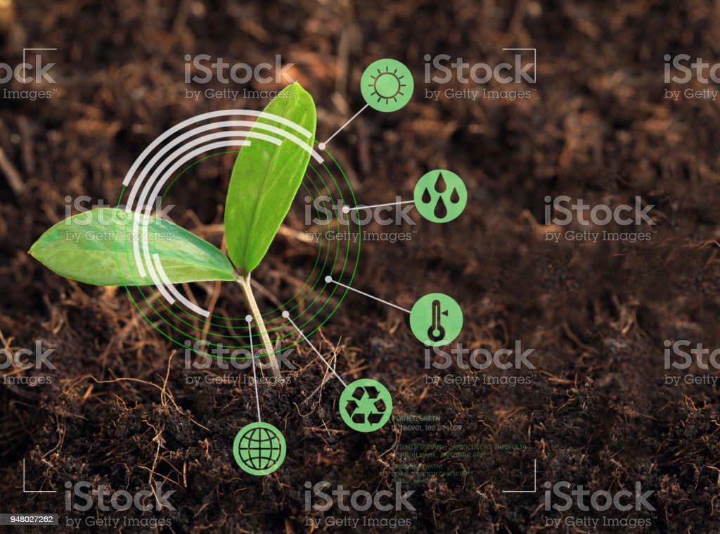 Young plant in focus on nature exploration stock photo