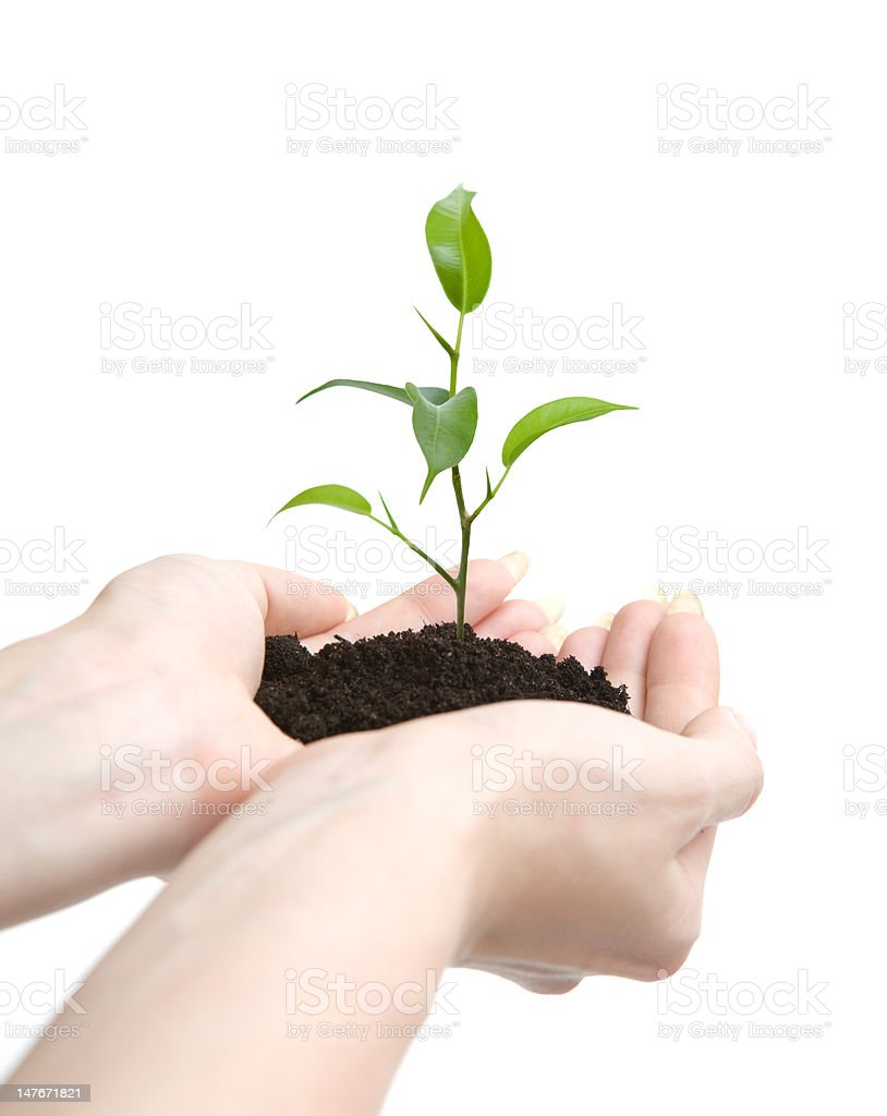 Young plant in human hands royalty-free stock photo