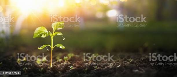 Photo of Young Plant in Sunlight