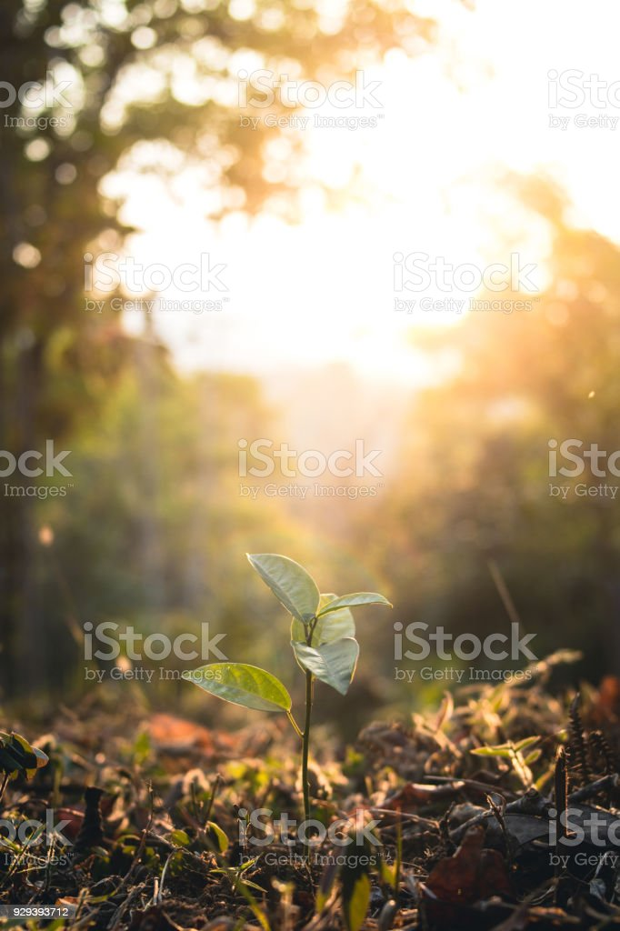 junge Pflanze im Wald-Abend – Foto