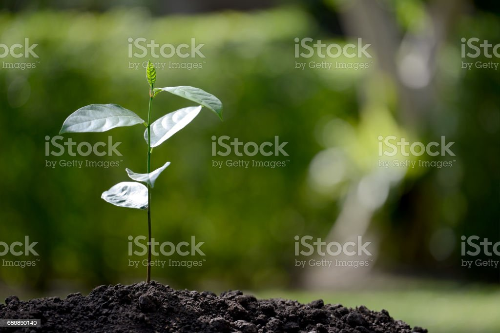 Young plant in the morning light on nature background stock photo