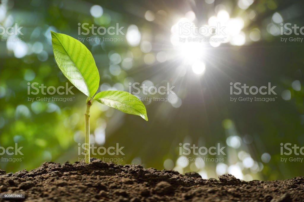 Jóvenes de la planta en la luz de la mañana en el fondo de la naturaleza - foto de stock