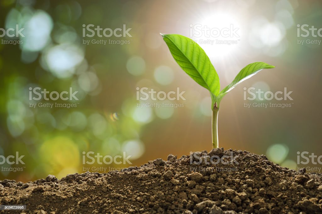 Young plant in the morning light on nature background royalty-free stock photo