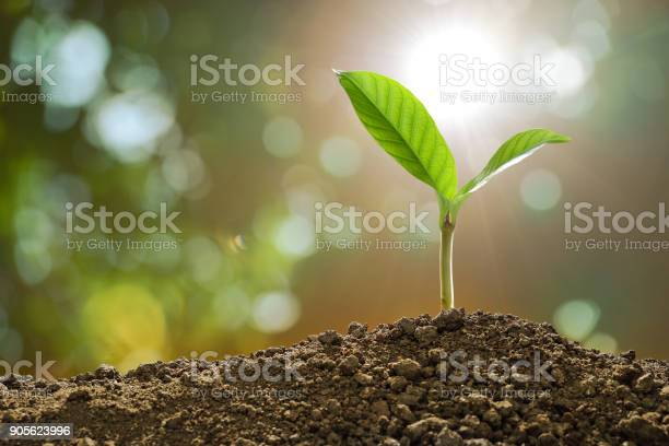Photo of Young plant in the morning light on nature background