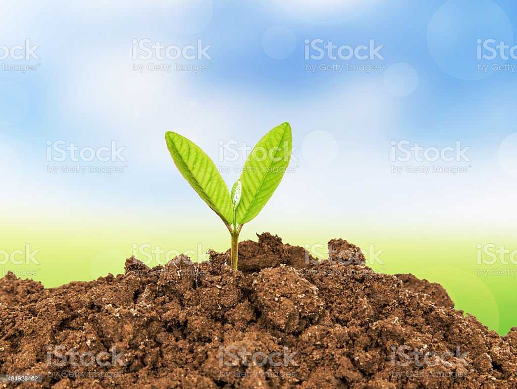 young plant - new life growing in spring stock photo