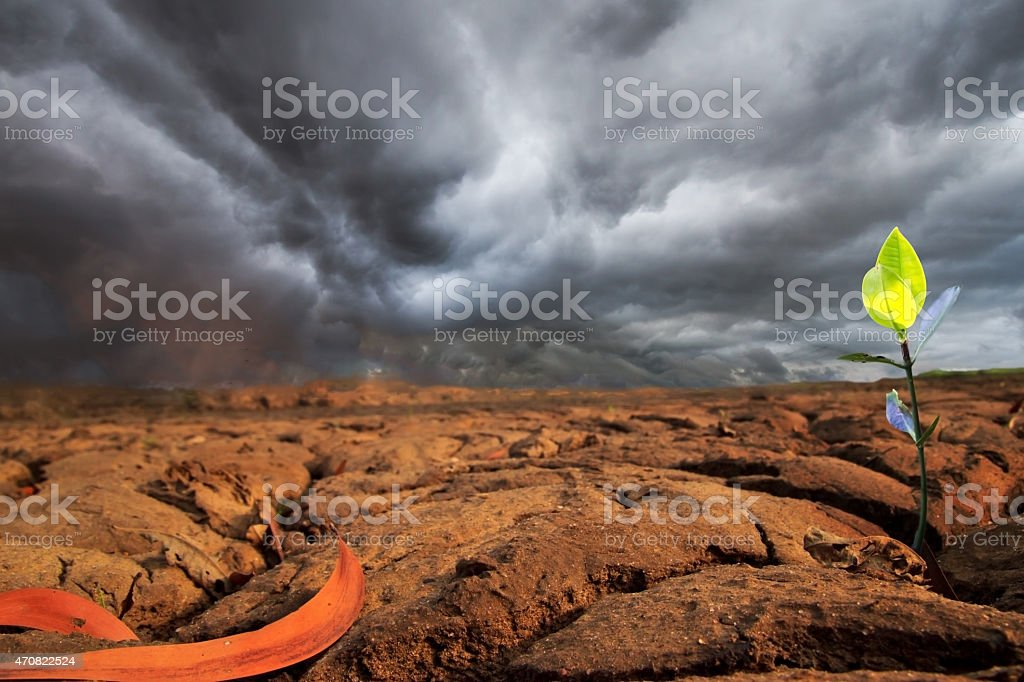 young plant on dry earth texture at thailand stock photo